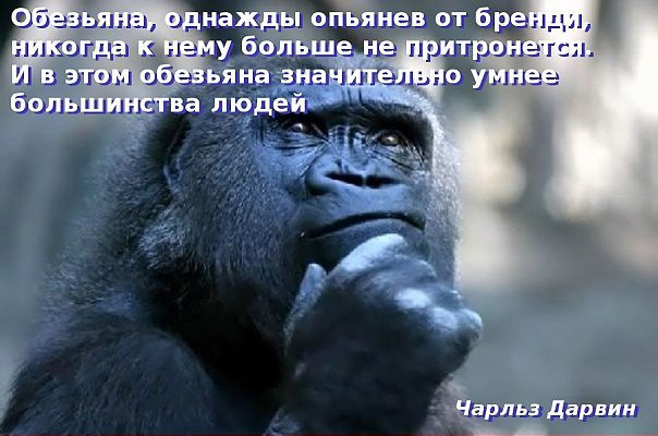 drunk-monkey